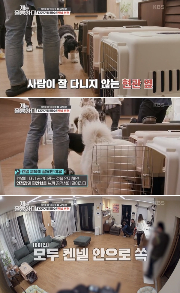 'Dogs are Incredible' Kang Hyung-wook, Kennel training for multi-family families