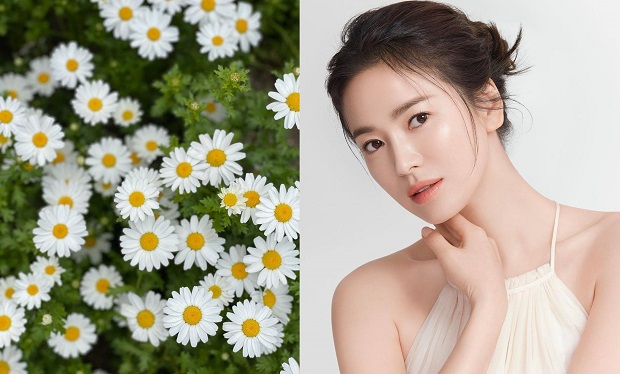 """Song Hye-kyo, mother's profile flower photo?..""""haha I took the photo"""""""