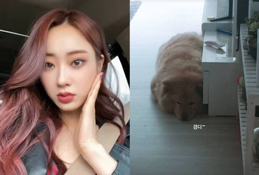 After breaking up with Jeong Jin-woon, Kyungri posted a photo of her dog